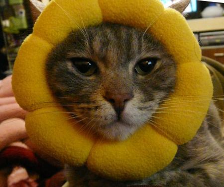 吹くほど可愛い画像『ポンデ猫。。』