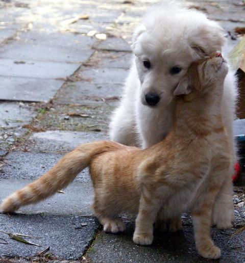 吹くほど可愛い画像『プルートになつく犬』【ほっこりぃカフェ】