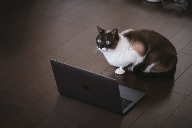 cat126IMGL6424_TP_V