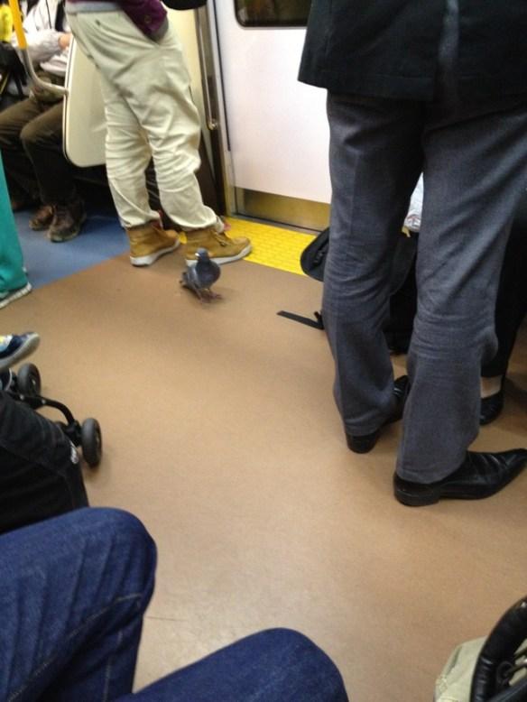 電車にハト乗ってきたったwwwwww