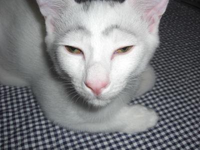 【悲報】 「まったく可愛くないネコの画像」 一枚目から強烈過ぎるwwwwwwwwwwwwww