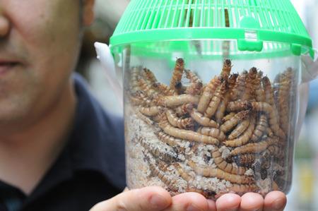 【閲覧注意】 国連「もっとみんな昆虫食おうぜー!昆虫ー!」