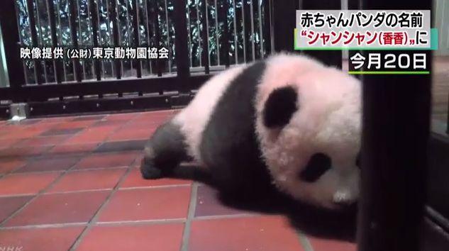 パンダ 上野動物 シャンシャンに関連した画像-01