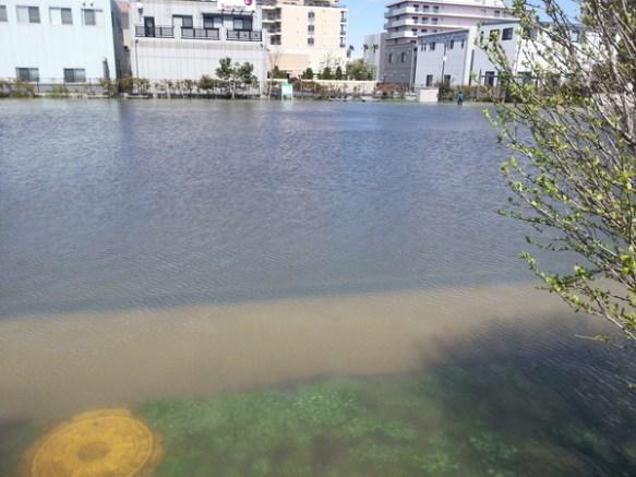 【速報】公園が水没してるワロタwwwwwwww