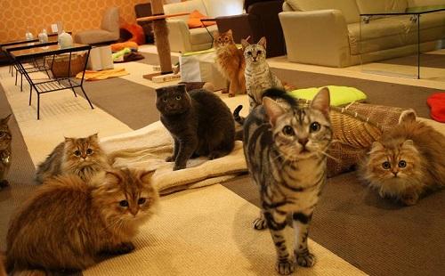 【画像あり】かわいい猫がいっぱいの猫カフェに行きたい(´・ω・`)