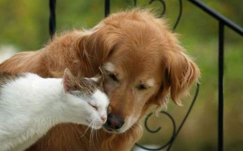 バカ「猫は懐かないから犬一択だわ^^;」 ←は?