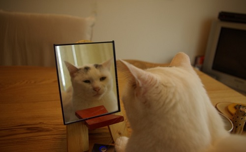 内側が鏡の球体の中に入ると気が狂ってしまうって本当?