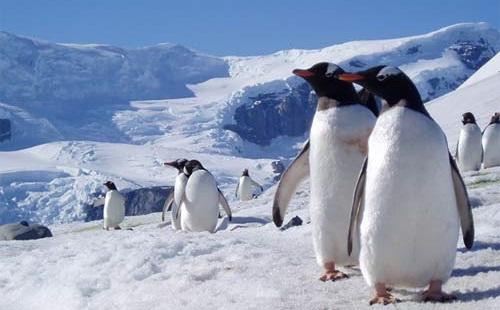 ふなっしー、ついに南極大陸に上陸!ガチャピンでも成し遂げてない偉業達成。完全に世代交代