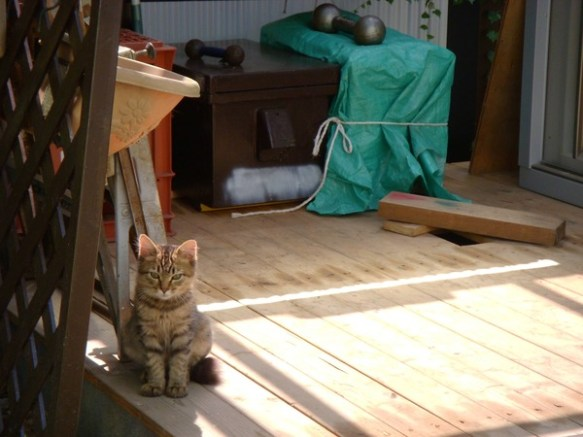 うちの猫たんの可愛さがもはや芸術的なんだがwwwwwww