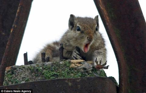 【画像】リスが、ナッツを落とした瞬間の顔wwwwwwwwwwwwwwwwwwwwwwwwwww