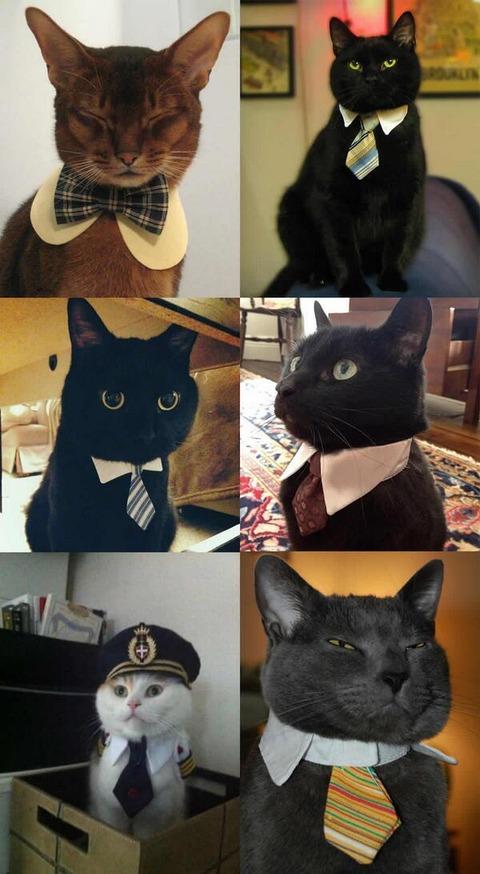 【大発見】 ネコにネクタイをつけるとクッソかっこよくなる (画像あり) wwwwwwwwwwww