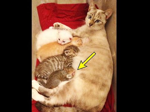 【画像】可愛いママ猫が子リスを拾ってきた!赤ちゃん猫たちと一緒に母乳を飲む様子が可愛いと話題に