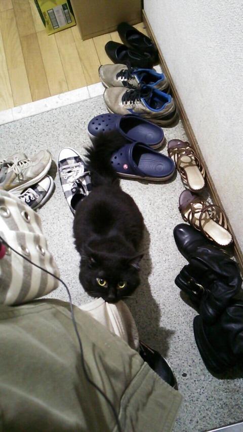 【画像あり】 うちの猫に「出かけてくるね」と言った結果wwwwwwwwwwwwww