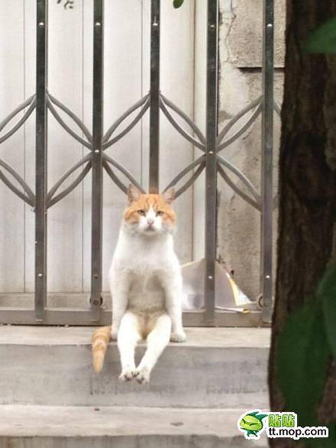 予想外の座り方でご主人様を待ち続けるネコが激写される