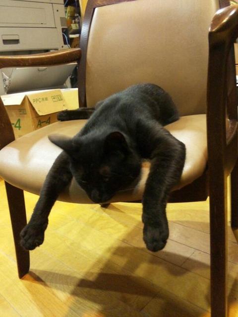 【画像あり】見知らぬネコが家宅侵入しすっかりくつろぐ事案発生!