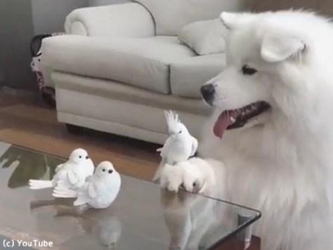 「う、動けない」…鳥に困ってるワンコがかわいい00