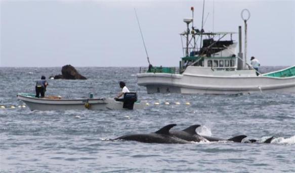 「八つ裂きにしてもおさまらん」イルカ追い込み漁、太地町の「組合長」に脅迫文