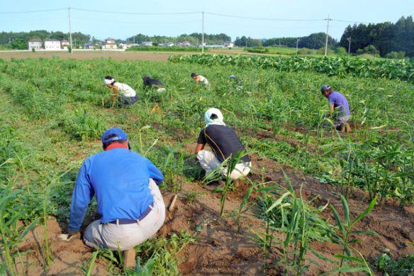 ム所帰りの男たちを農業で支援「地道にやれば返ってくる仕事。達成感がある」「我慢強くなった」