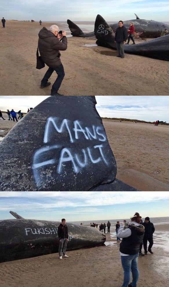 イギリスに座礁した巨大クジラに「フクシマ」日本批判ともとれる反原発メッセージが書き込まれる(画像あり)