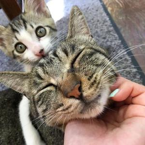人気の猫ツイッター休止、客の暴言やマナー悪化で…無断で撮影「バカ、死ね、客呼びたくてやってるくせに」