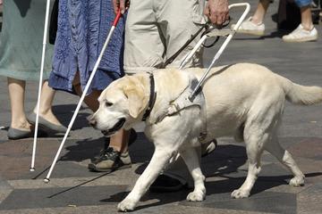 タクシーが盲導犬乗車拒否、運輸支局が行政処分を検討