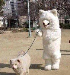 ペットとお揃いの服で散歩する人が面白すぎると話題に…画像あり