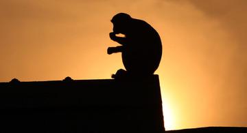 屋台の猿がスカーフ盗む → 報復に3人と1匹殺害 → 戦車が出動して戦争に突入…リビア
