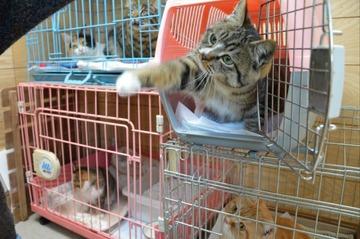 愛護団体「犬猫を殺処分するな!」 保健所「では引き取るのやめます」 → 団体「これ以上受け入れられない!誰か助けて!!」