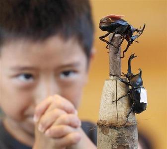 山形で「全国かぶと虫相撲大会」開催 → 前日にホームセンターで購入した課金厨が優勝wwwww