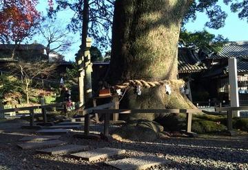 【社会】ご神木に抱きつき、川に投銭…わがまま参拝に神社悲鳴