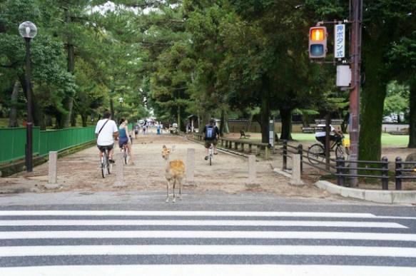 【画像】奈良公園の鹿が信号をきちんと守ってる件wwwwwwwwwwwwwwwwwwwww