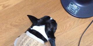 うちの犬の寝方ワロタwww