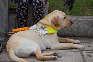 【北海道】盲導犬同伴、宿泊できず…視覚障害者の交流会中止