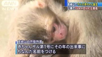 高崎山動物園が赤ちゃんザルに「シャーロット」と名付ける → 抗議殺到して取消しを検討