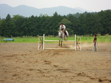 【栃木】馬4頭を盗んで九州まで運搬、食肉業者に売却…国体優勝の26歳アルバイトを逮捕