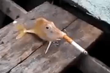 """【海外】魚に火の付いたタバコを押し込んで""""喫煙させてみた"""" → 「非人道的だ!」と批判殺到"""