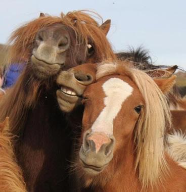 【画像あり】世界一カッコイイ馬が話題にwwwwwwwwwww たてがみ、めっちゃフサフサなんだけどwwwwwwwwww