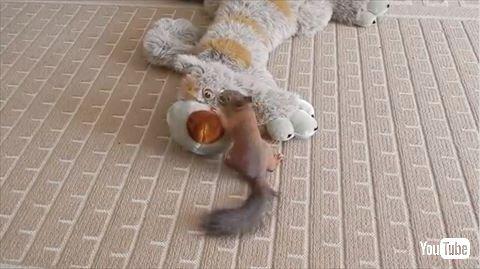 【動画あり】ぬいぐるみで遊んでいたリスさんのところに黒猫が乱入してきて・・