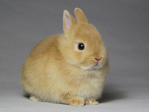 めっちゃ跳びはねるウサギが可愛すぎるんだがwwwwwwwww