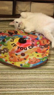 おもちゃに飽きた様子が切々と伝わってくる猫ちゃんwwwwwwwwwwwww