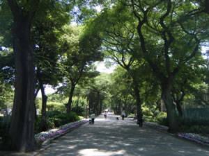 【要注意】住吉公園で強姦事件発生!?犯人は逃走中の模様