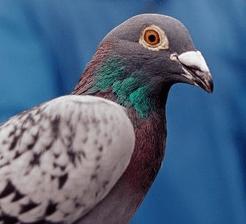 【!?】インドのモディ首相への脅迫文を所持していたとして鳩が逮捕されるwwwwwwwwww