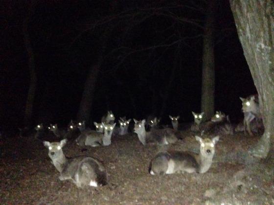 夜の奈良公園怖すぎ、絶対に行くな。