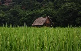 【農業】 日本の農家って守る必要なくね?
