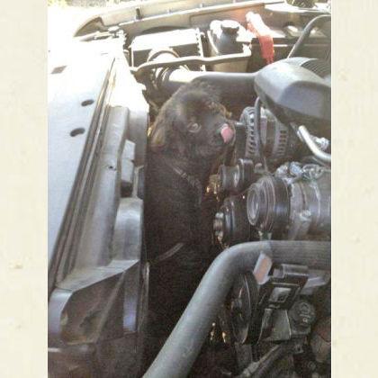 【米国/どうぶつ】猛暑の中でエンジンの上に乗っていた犬、180キロのドライブを生き延びる