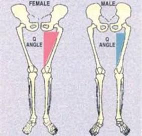 「骨盤 男性と女性の違い」の画像検索結果