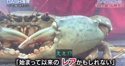tokio 古代サメ捕獲 (1)