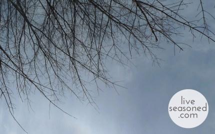 liveseasoned_spring2014_maple02_wm