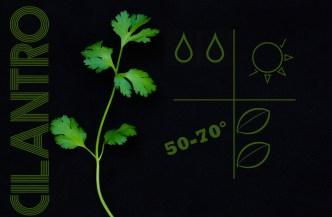 liveseasoned_spring2014_herbs-3