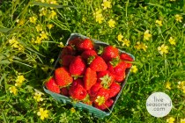 liveseasoned_spring2014_strawberries1